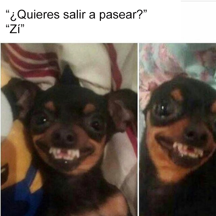 memes-perros-14-5909fe0686dee__700