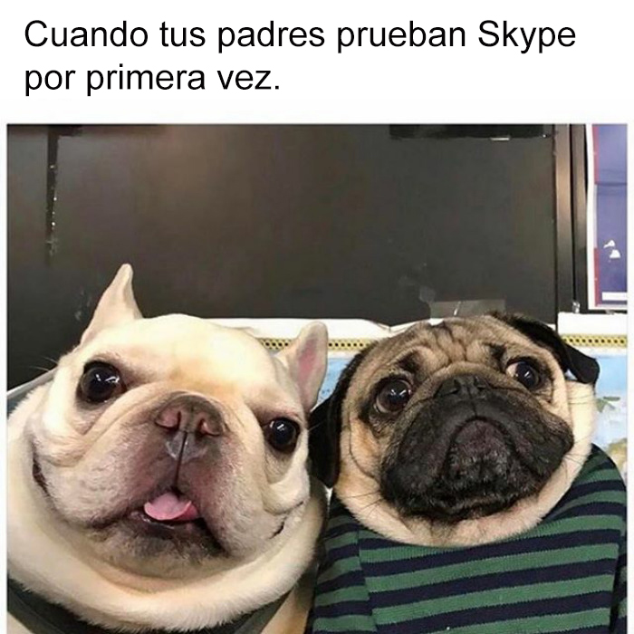 memes-perros-15-5909fcebe88f0__700