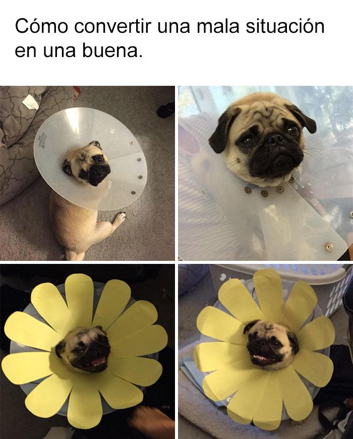 memes-perros-17-5909fcfba0588__700