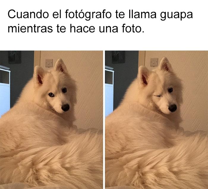 memes-perros-18-5909fc34e7735__700