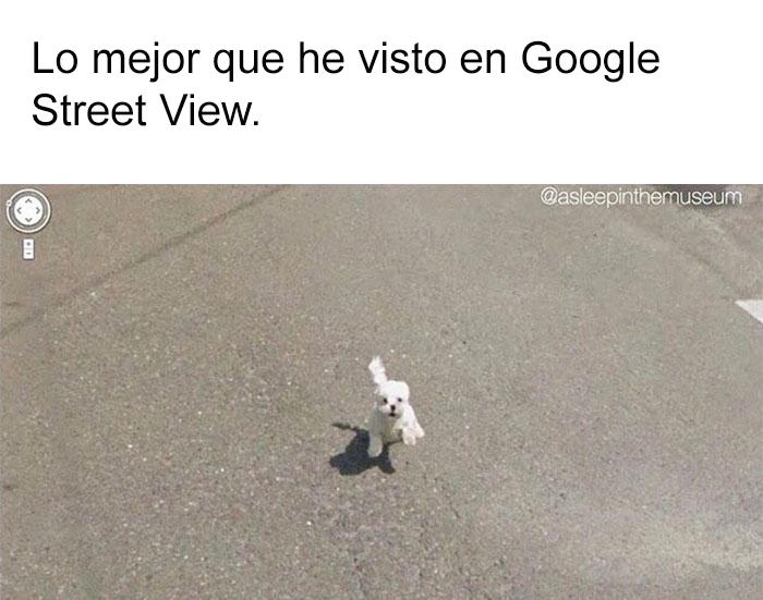 memes-perros-20-5909fc2895a05__700