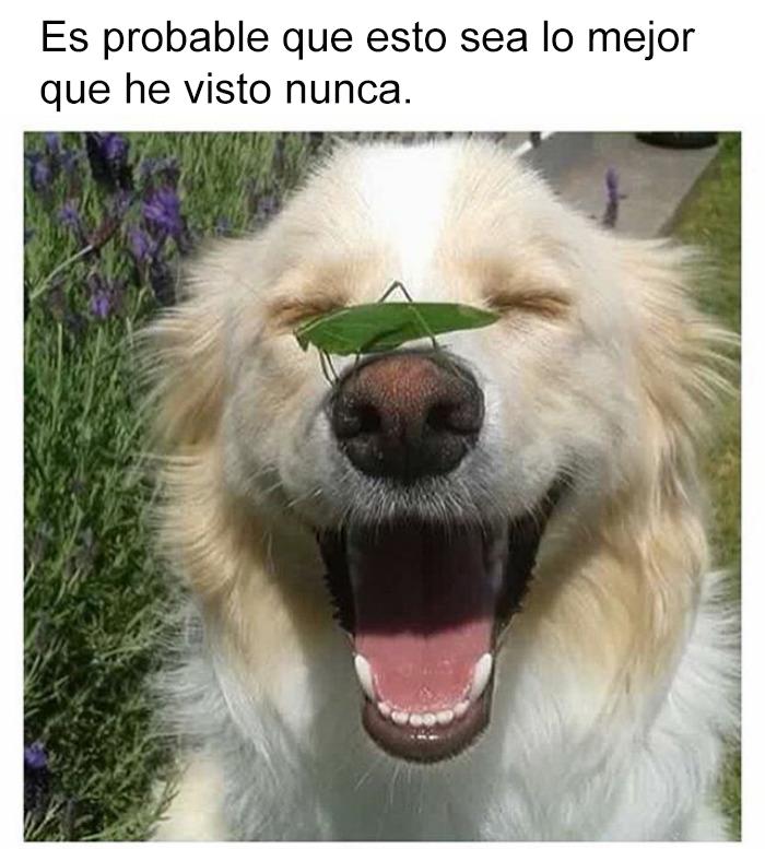 memes-perros-4-5909fd46e574b__700