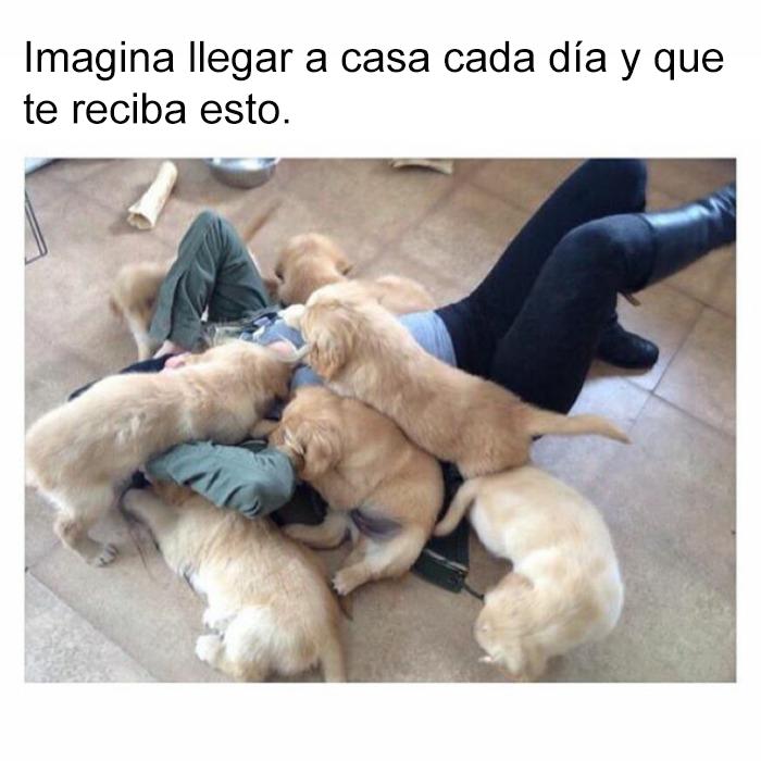 memes-perros-5-5909fe428d066__700