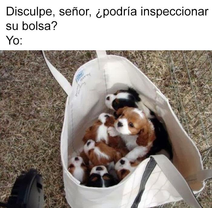 memes-perros-7-5909fcacf3bab__700