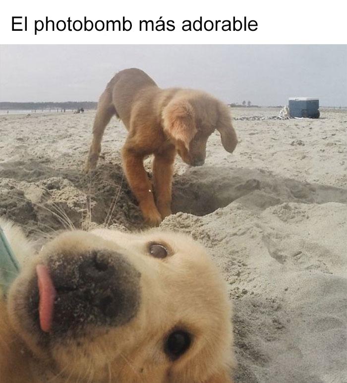 memes-perros-9-5909fda892ba4__700