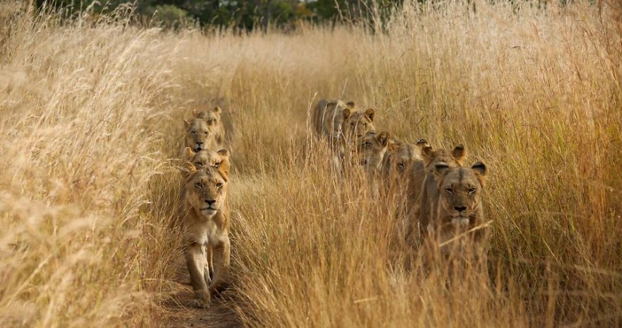national-geographic-travel-nature-photographer-of-the-year-contest-2017-30-595c9380dfa98__880