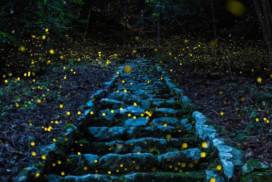 national-geographic-travel-nature-photographer-of-the-year-contest-2017-61-595c93b68f067__880