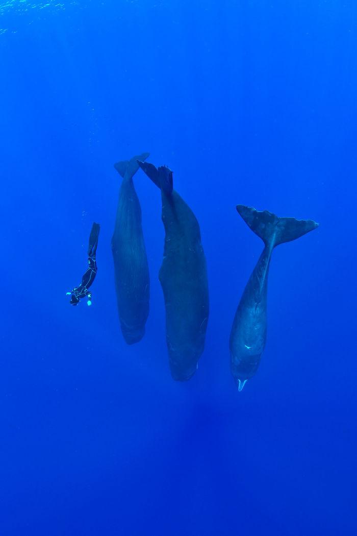 sperm-whales-sleep-franco-banfi-10-5968932e381b8__700