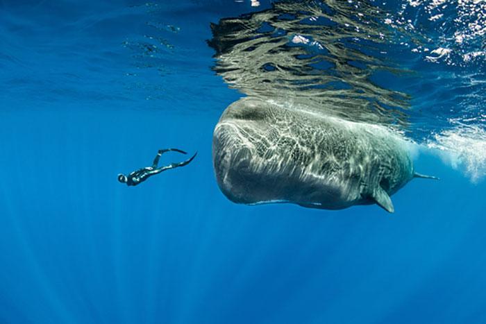 sperm-whales-sleep-franco-banfi-5968a2e809fcc__700