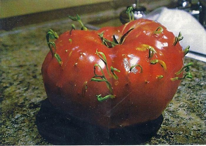 5982c910d5f40_tomatoes1__700