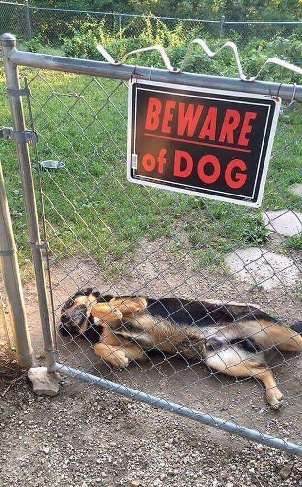bad_dog03