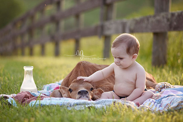 cute-cows-are-dogs-32-598862b917190__605