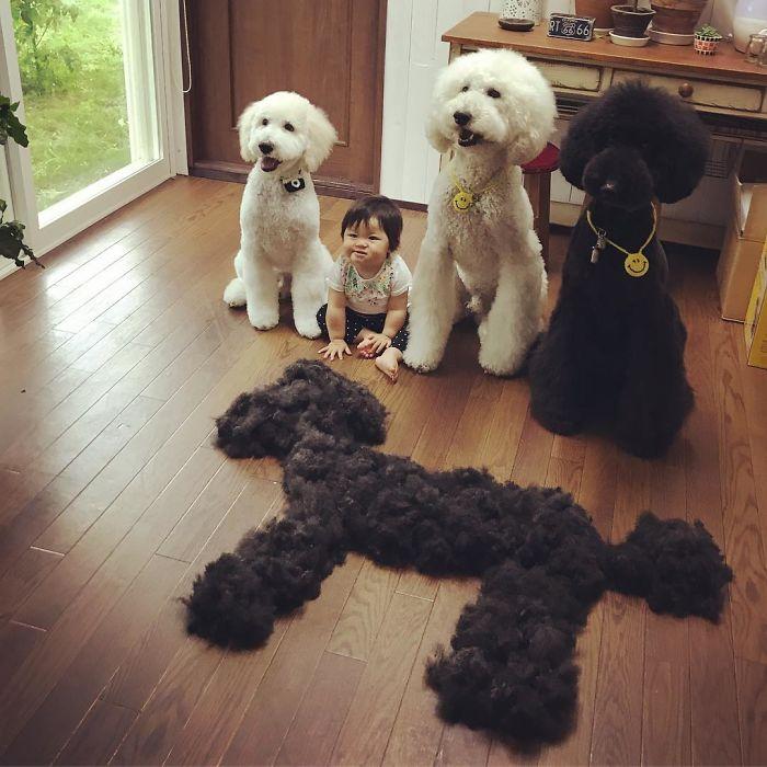 girl-poodle-dog-friendship-mame-riku-japan-1-59819d2ed6e2e__700