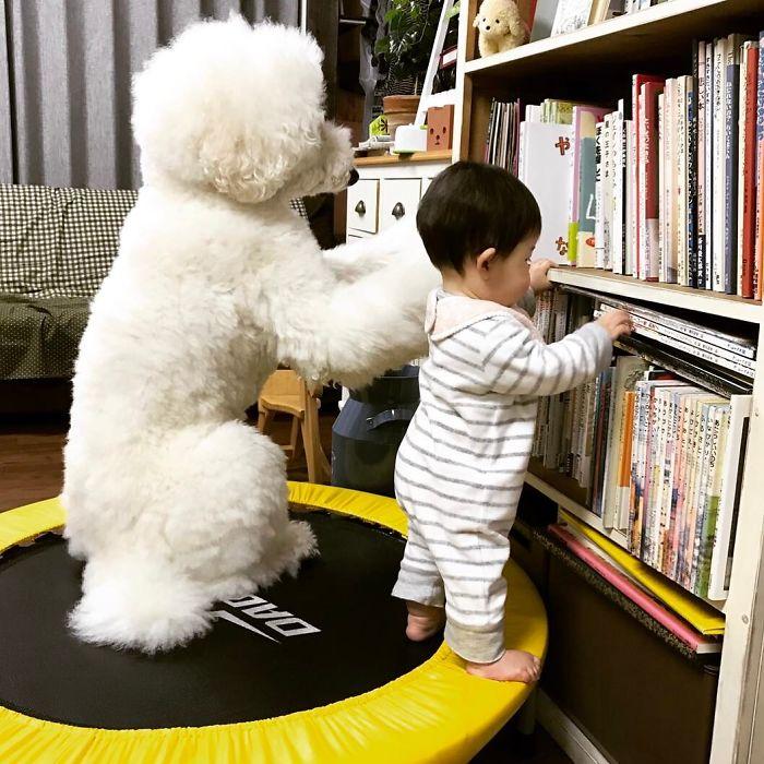 girl-poodle-dog-friendship-mame-riku-japan-11-59819d4431f6e__700