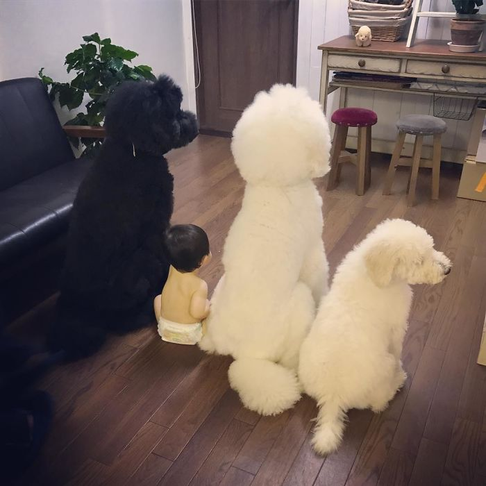 girl-poodle-dog-friendship-mame-riku-japan-14-59819d4a29ca7__700