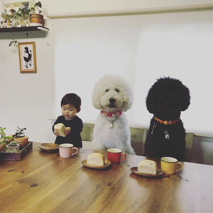 girl-poodle-dog-friendship-mame-riku-japan-20-59819d5f1676c__700