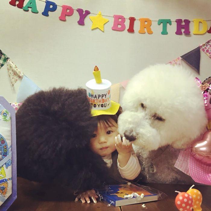 girl-poodle-dog-friendship-mame-riku-japan-21-59819d612727b__700