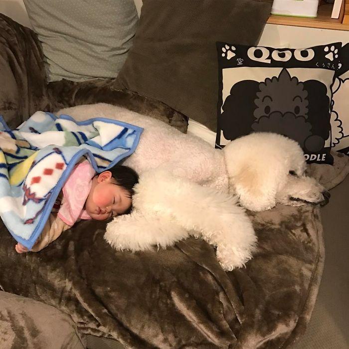 girl-poodle-dog-friendship-mame-riku-japan-24-59819d6a560d2__700