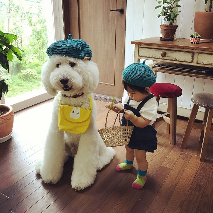 girl-poodle-dog-friendship-mame-riku-japan-29-59819e1e4c23e__700