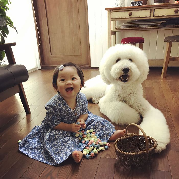 girl-poodle-dog-friendship-mame-riku-japan-30-59819ea98c19c__700