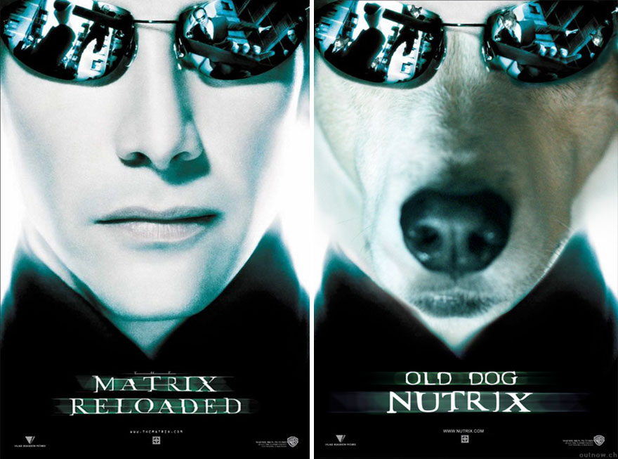 I-Photoshop-My-Dog-Into-Movie-Posters-5984298338520__880