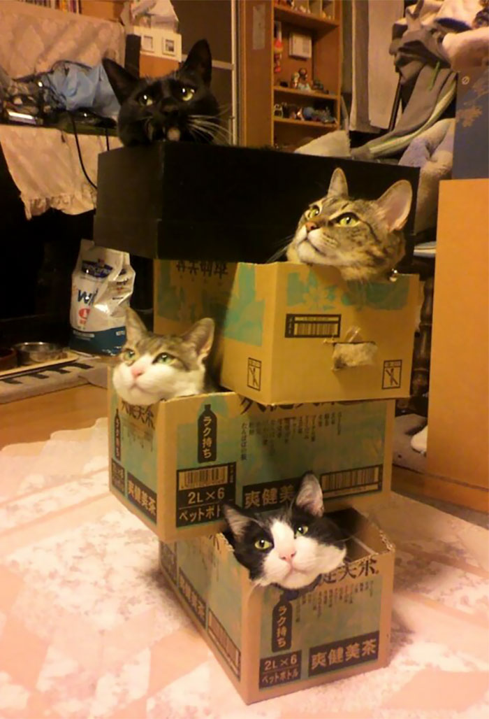 if-it-fits-i-sits-post-your-photos-of-cats-fitting-into-tightest-spaces-100-597b2bba1f4d7__700