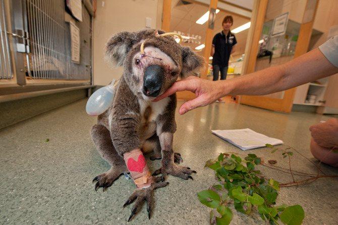 koalas08_670x446