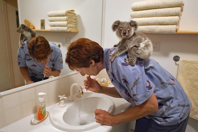 koalas13_670x447