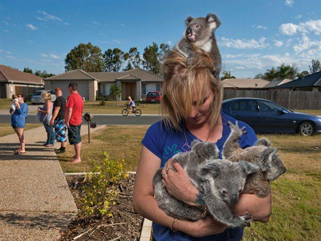 koalas15_634x476