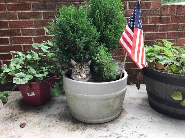 Little-Grey-July-growing-cats-597b925121b2a__700