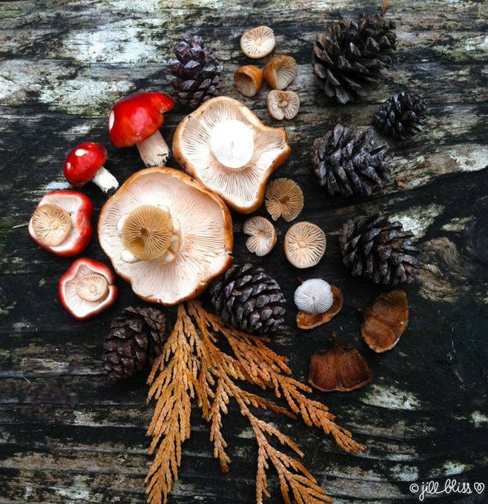 mushrooms-nature-medley-photos-jill-bliss-1-59895e19d4400__700