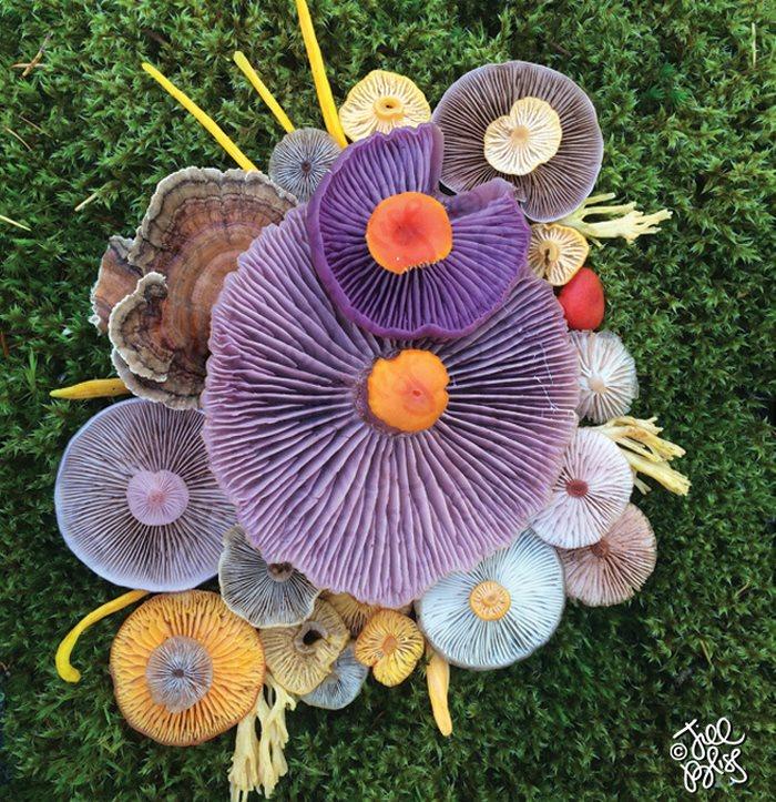 mushrooms-nature-medley-photos-jill-bliss-11-59895e32a4fd1__700