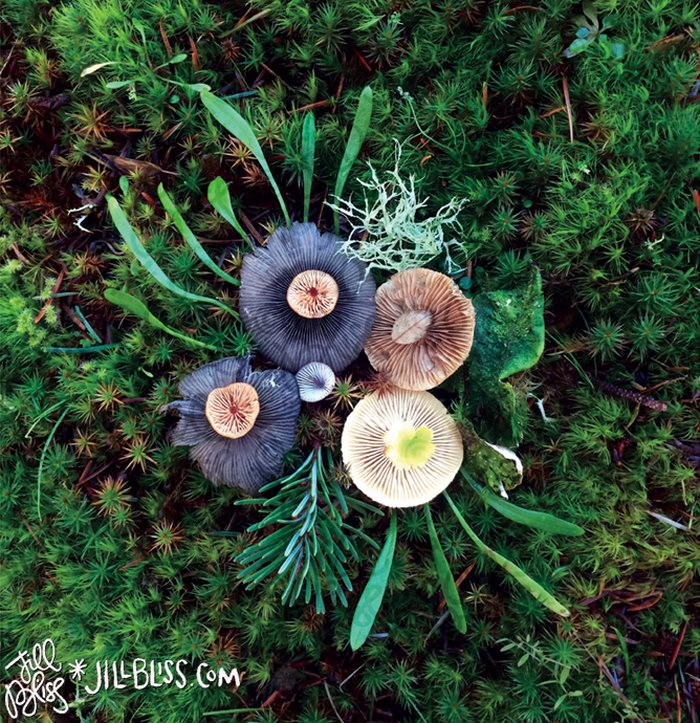 mushrooms-nature-medley-photos-jill-bliss-12-59895e34a8b75__700