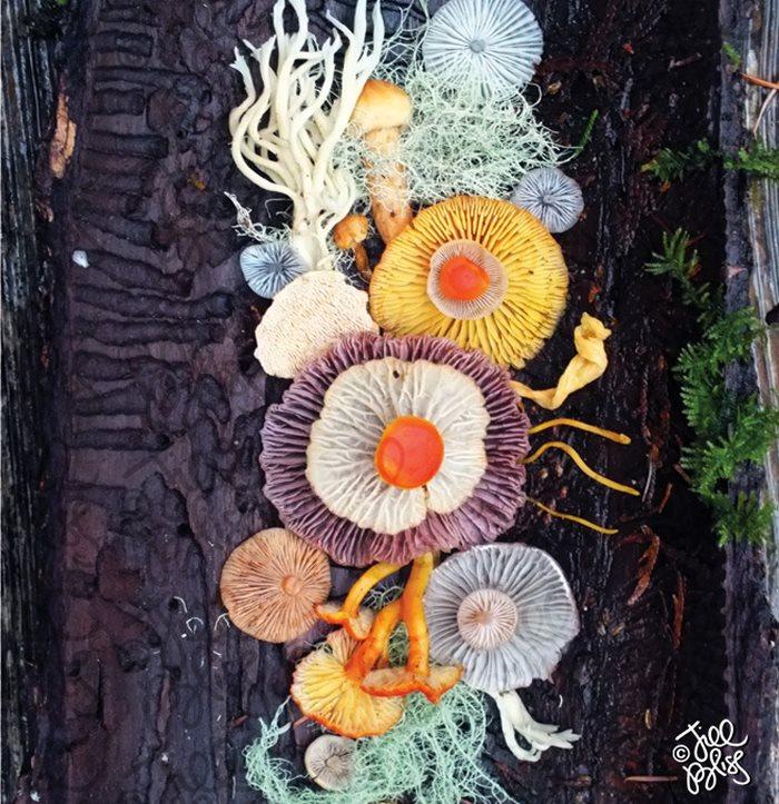 mushrooms-nature-medley-photos-jill-bliss-13-59895e36a0b28__700