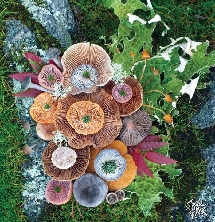 mushrooms-nature-medley-photos-jill-bliss-14-59895e3892648__700