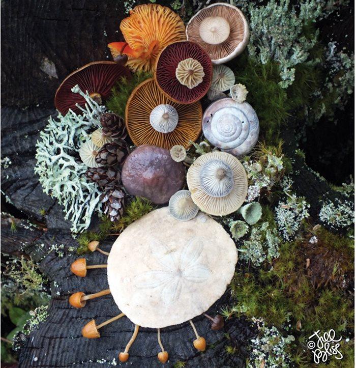 mushrooms-nature-medley-photos-jill-bliss-19-59895e439af20__700