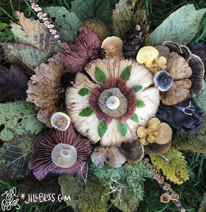 mushrooms-nature-medley-photos-jill-bliss-22-59895e4b9b5e0__700