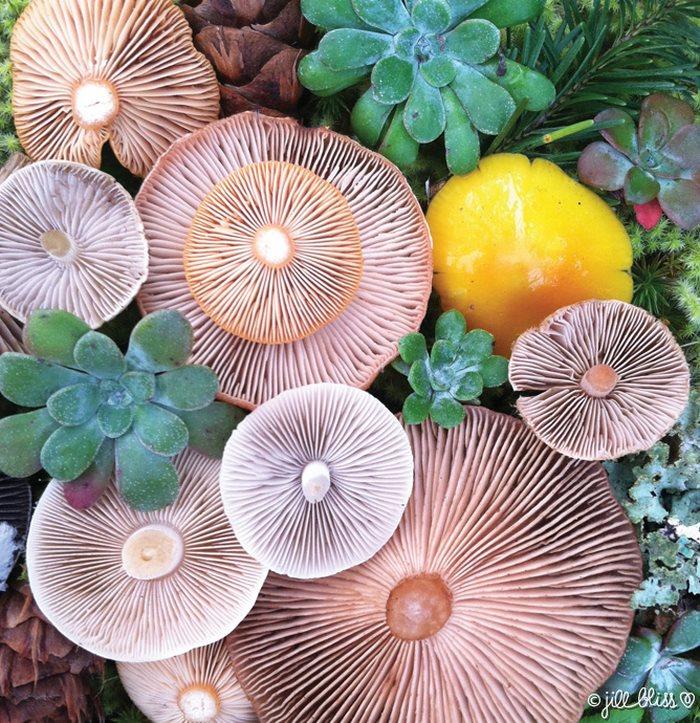 mushrooms-nature-medley-photos-jill-bliss-28-59895e5b9c058__700