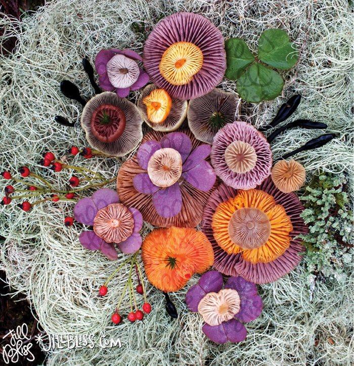 mushrooms-nature-medley-photos-jill-bliss-3-59895e1eb2e45__700