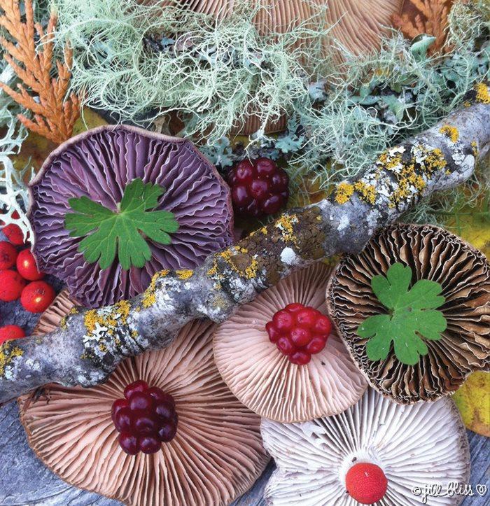 mushrooms-nature-medley-photos-jill-bliss-30-59895e61a889c__700