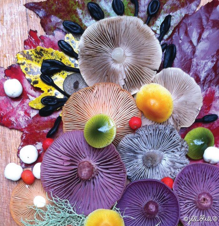 mushrooms-nature-medley-photos-jill-bliss-37-59895e738bd4e__700