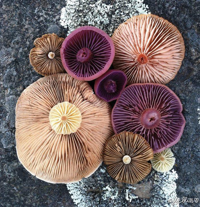 mushrooms-nature-medley-photos-jill-bliss-38-59895e7596861__700