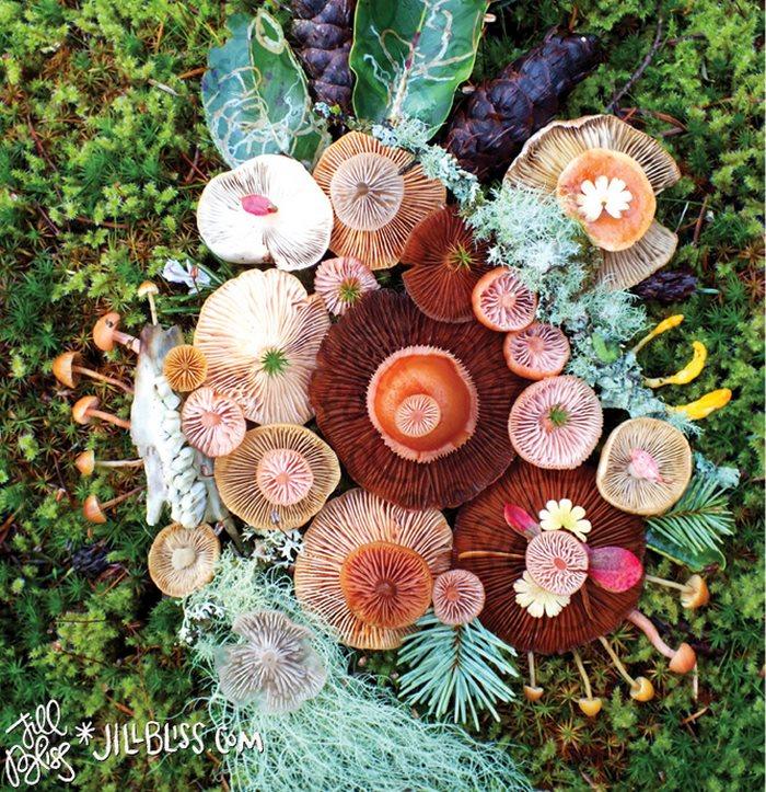 mushrooms-nature-medley-photos-jill-bliss-4-59895e218e9e9__700