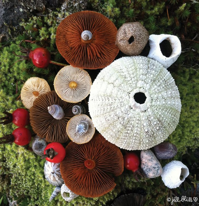 mushrooms-nature-medley-photos-jill-bliss-40-59895e79a03b5__700