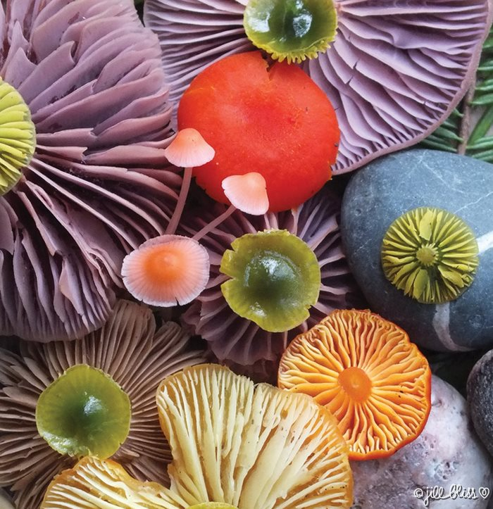 mushrooms-nature-medley-photos-jill-bliss-41-59895e7b99b14__700