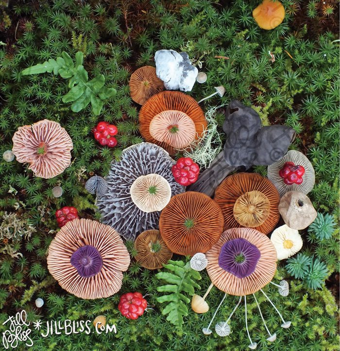 mushrooms-nature-medley-photos-jill-bliss-5-59895e2491bed__700