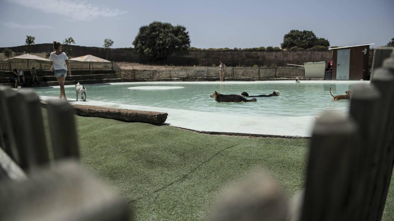 perropolis-asi-es-un-dia-en-la-unica-piscina-para-perros-de-madrid