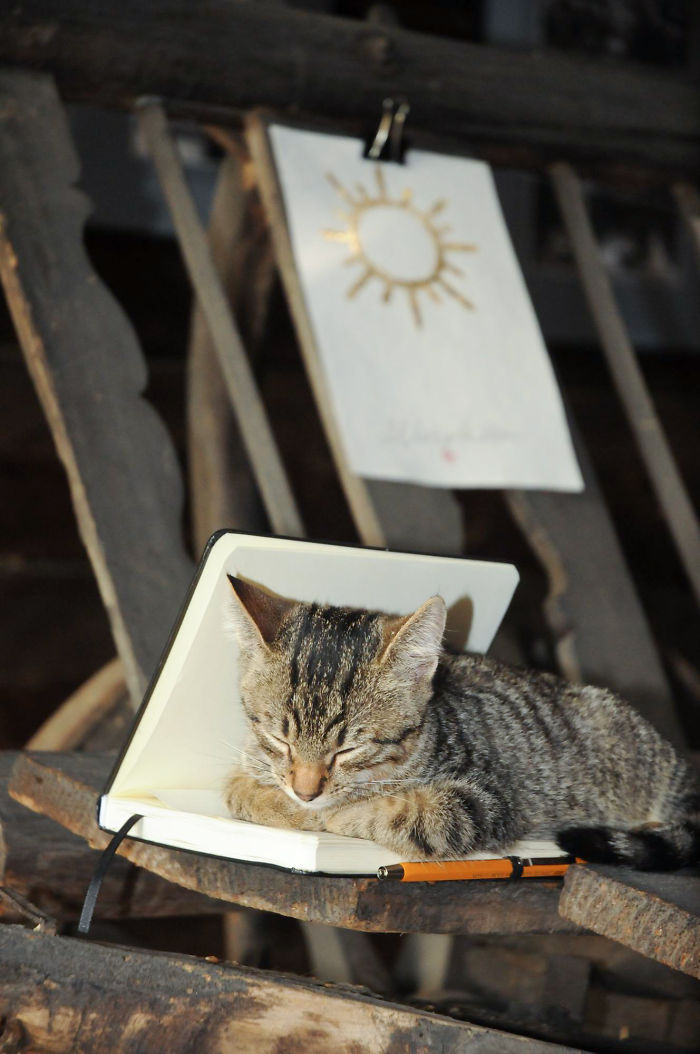 pisica-muzeul-satului-LM_0020-597b358b59aa2__700