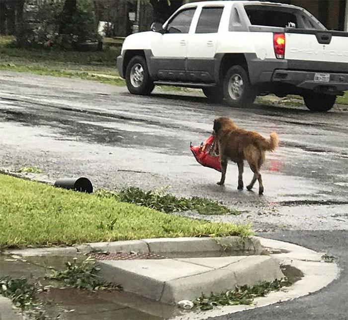 powerful-photos-hurricane-harvey-texas-12-59a5184330b69__700