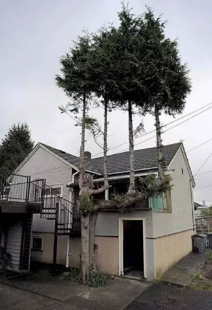 trees-refuse-to-give-up-100-598415fec1eff__700